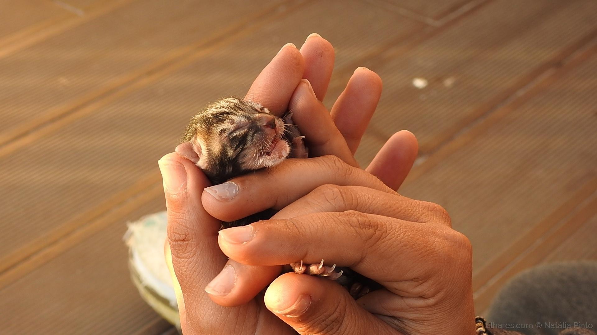 Animais/De mãos dadas...