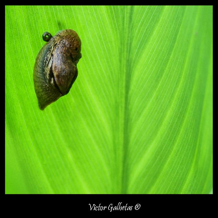 Animais/Sobre o Verde