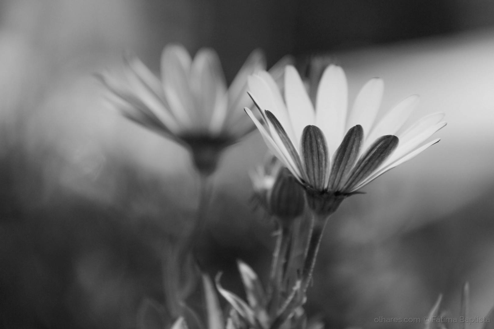 Macro/Flores no meu caminho
