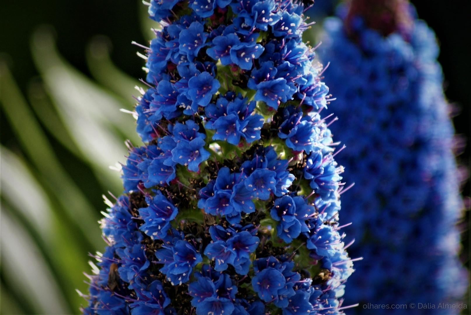 Macro/azul