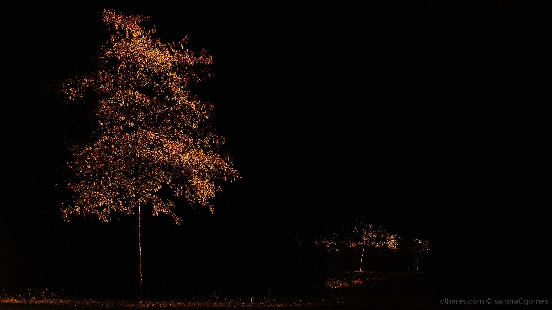 """Paisagem Natural/""""Uma luz de outono"""""""