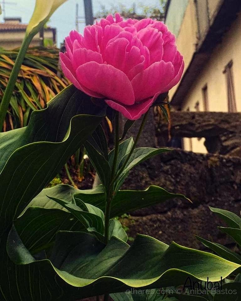Outros/A amizade sem confiança é uma flor sem perfume.