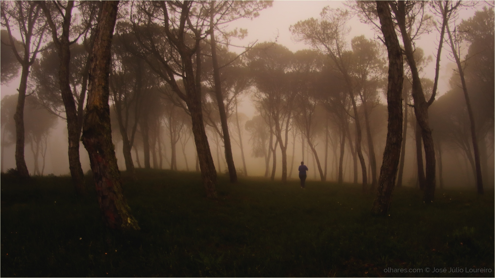 Paisagem Natural/Lost in the fog