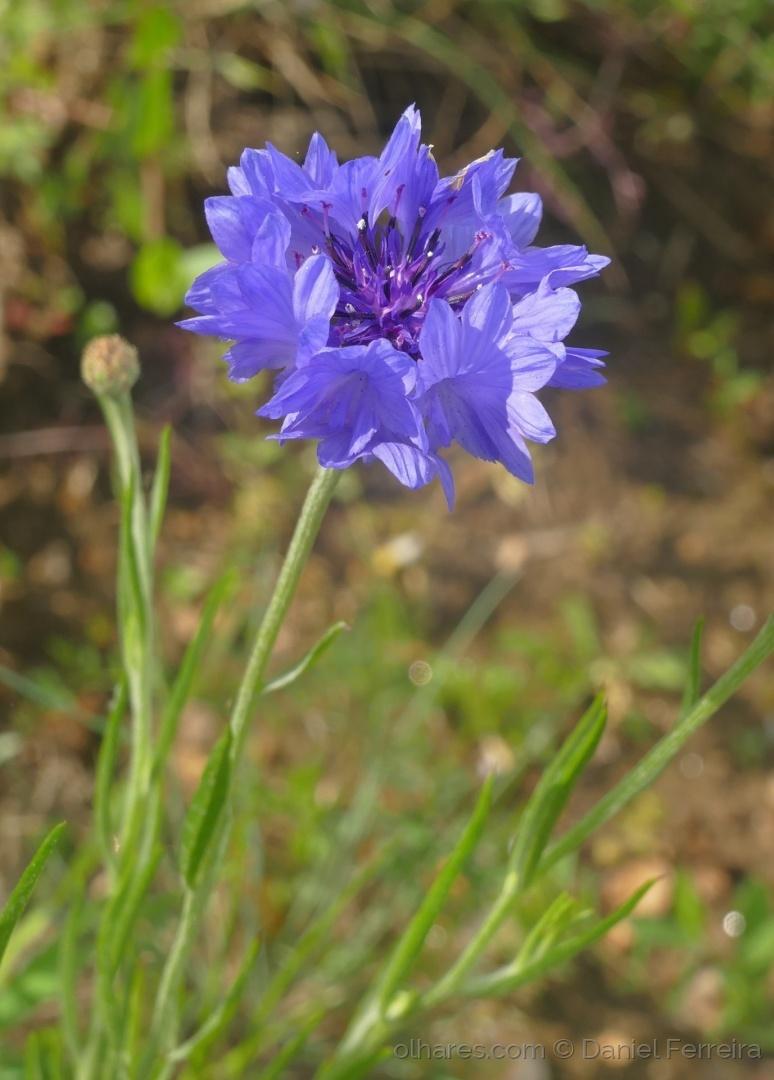 Macro/Uma flor em tons de roxo