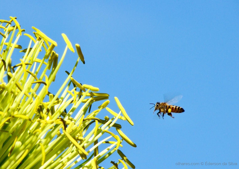 Animais/Em busca do néctar