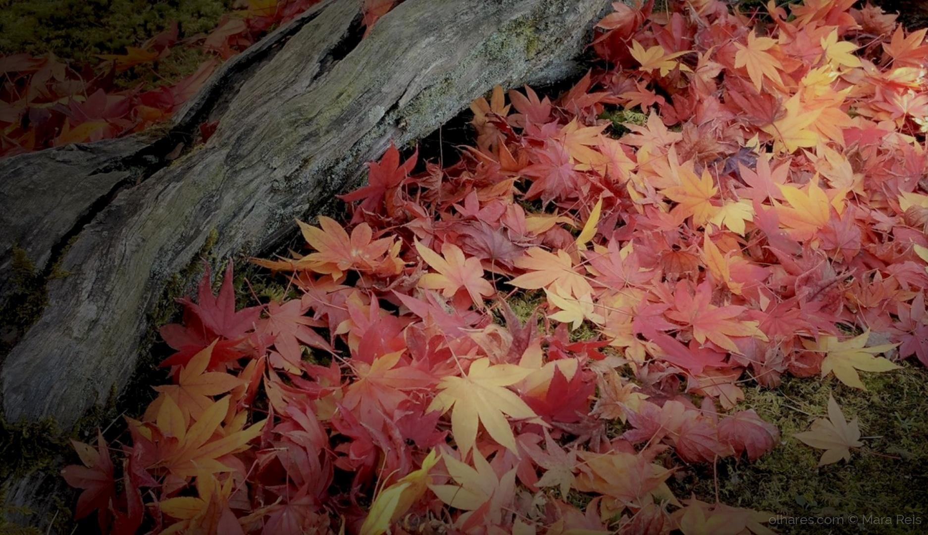 Paisagem Natural/No Japão já é quase outono