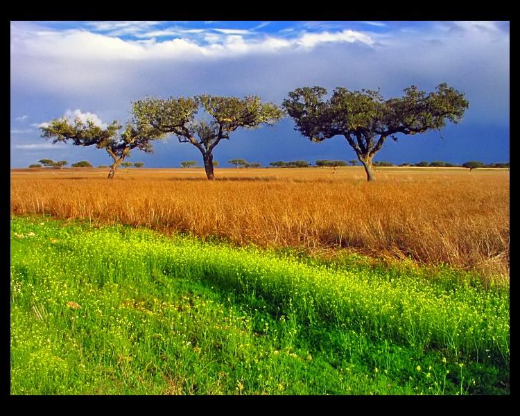 """Paisagem Natural/""""Campo Alentejano..."""""""