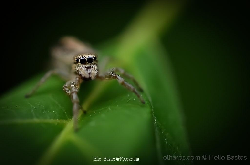 Macro/vida de insecto--