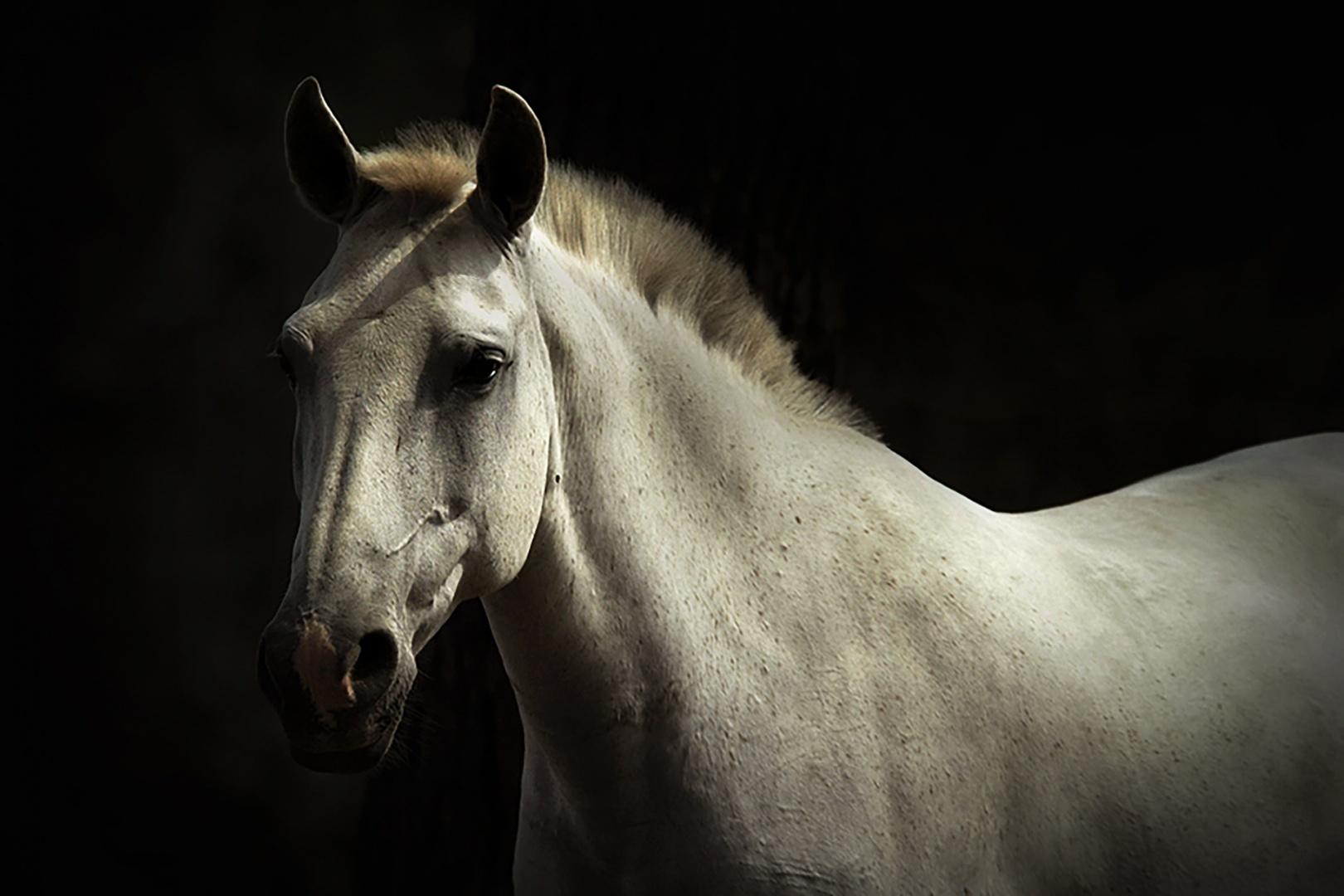 Animais/o animal mais belo que existe