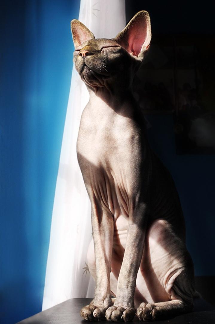 Animais/Barack apanhando banhos de sol