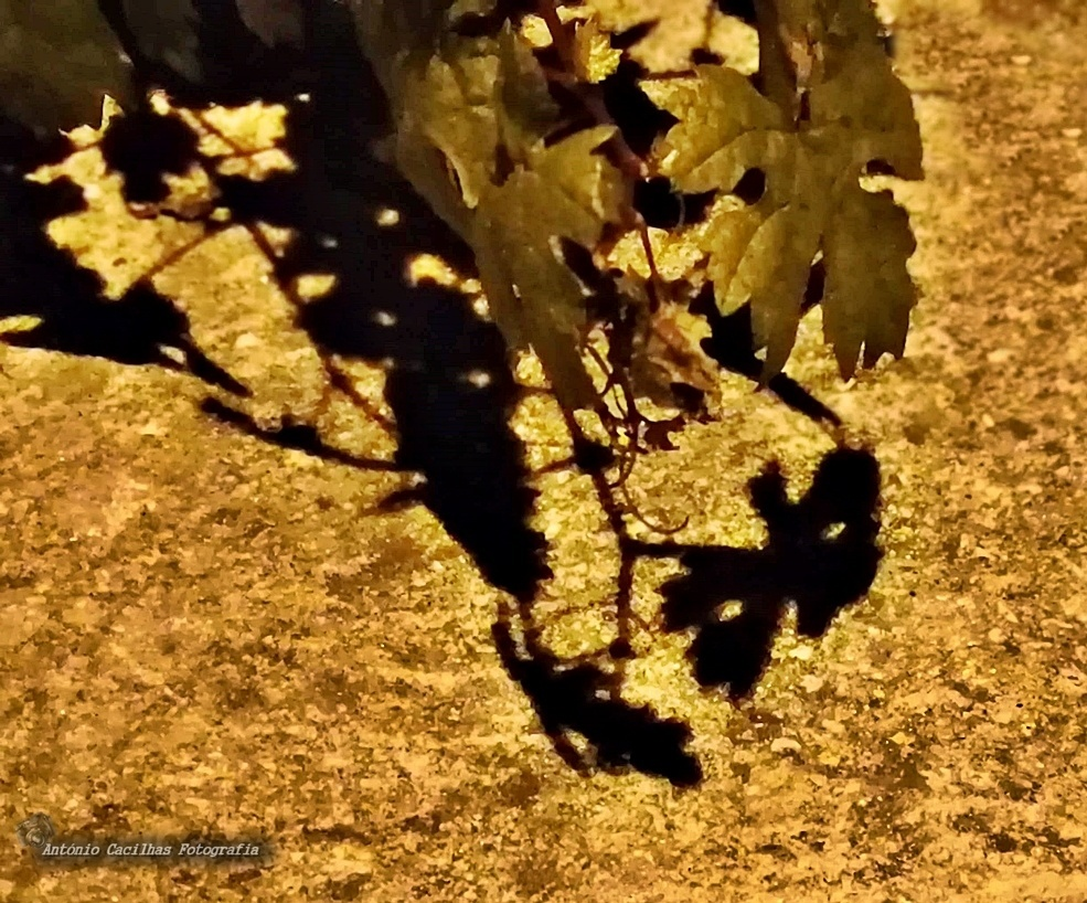 Abstrato/The mystery of the shadows