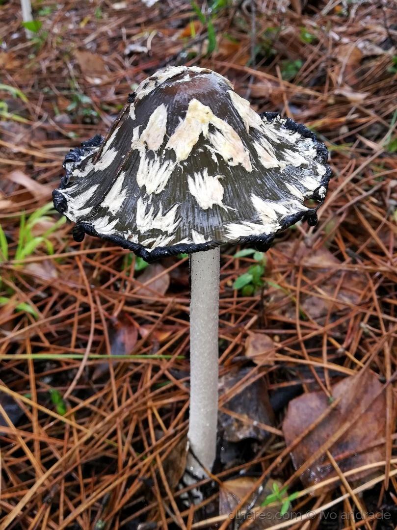 Macro/Mushrooms season is on