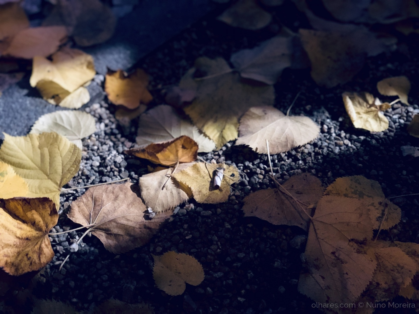 Abstrato/#leaves