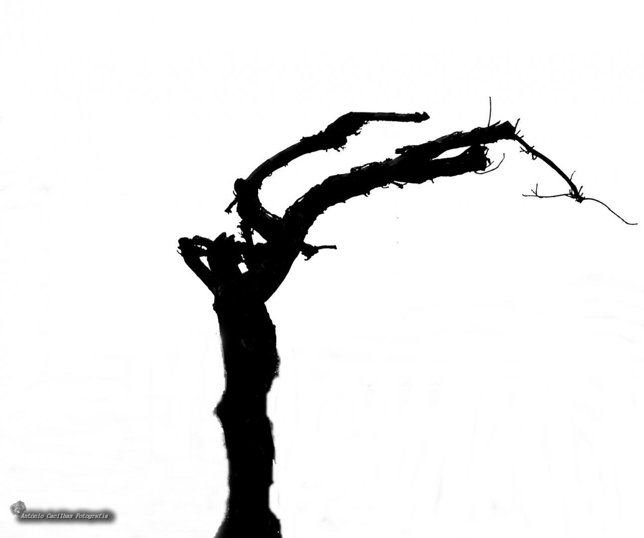 Abstrato/Bailarina