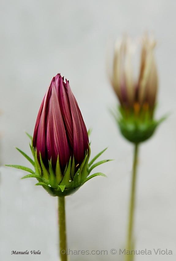 Macro/Uma simples flor
