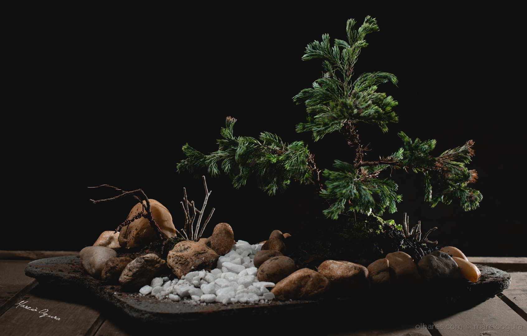Outros/bonsai