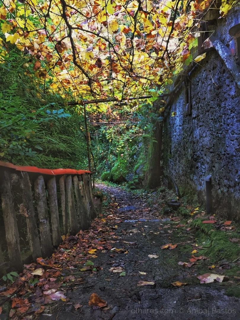 Paisagem Natural/Cores entre caminhos de pedra.