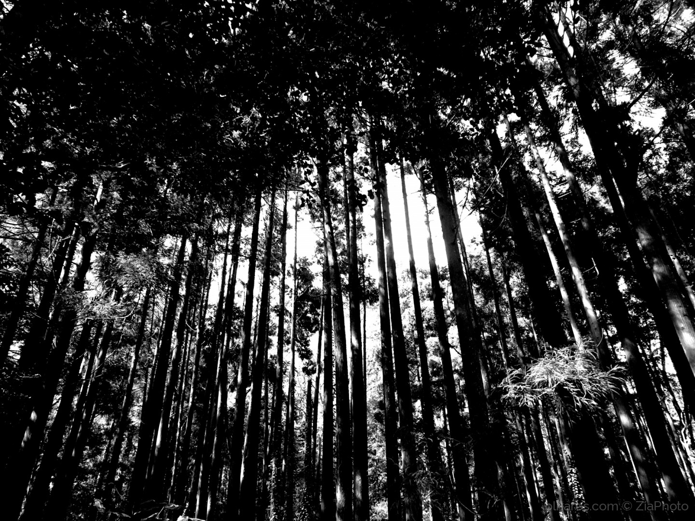 Paisagem Natural/Forest in black