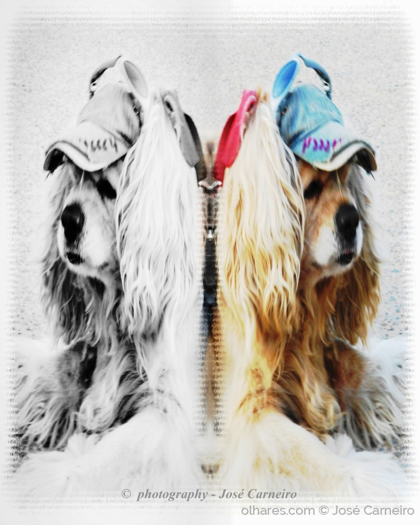 """Arte Digital/"""" TWINS ... The new style dogs """""""