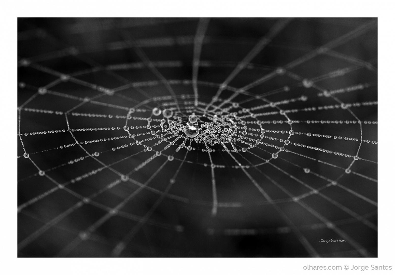 Abstrato/Manha de orvalho