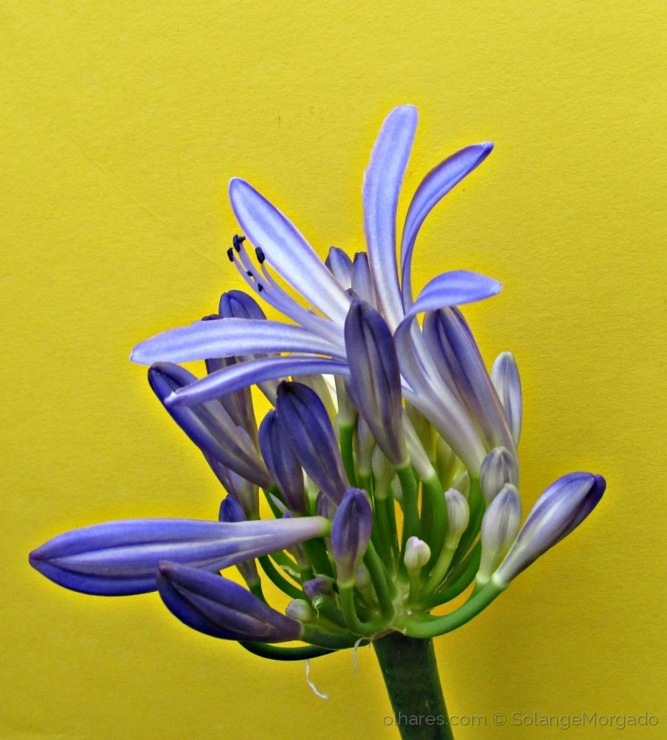 Arte Digital/ Flor com fundo amarelo....