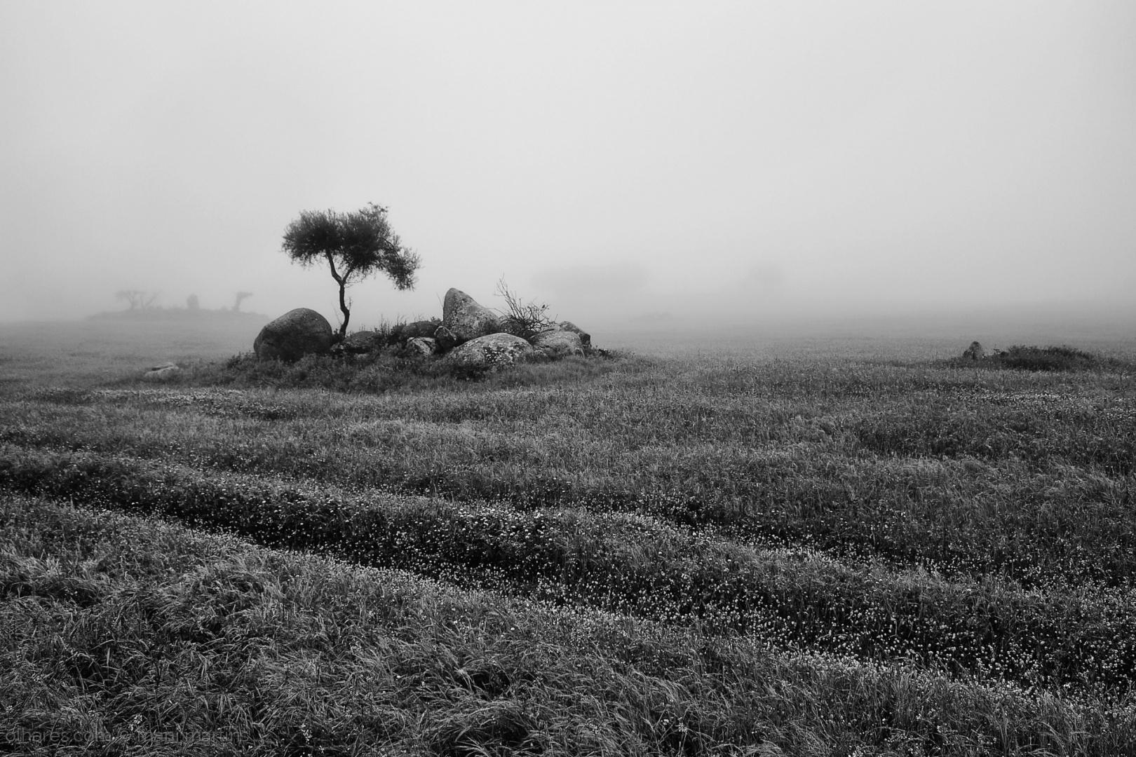 Paisagem Natural/white misty morning