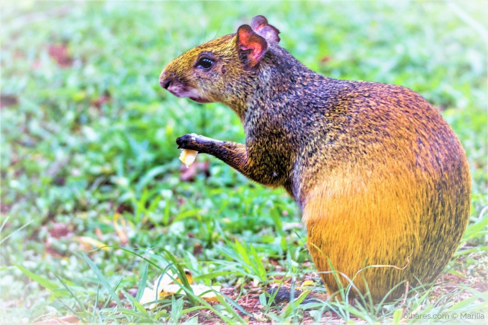 Paisagem Natural/Um roedor...