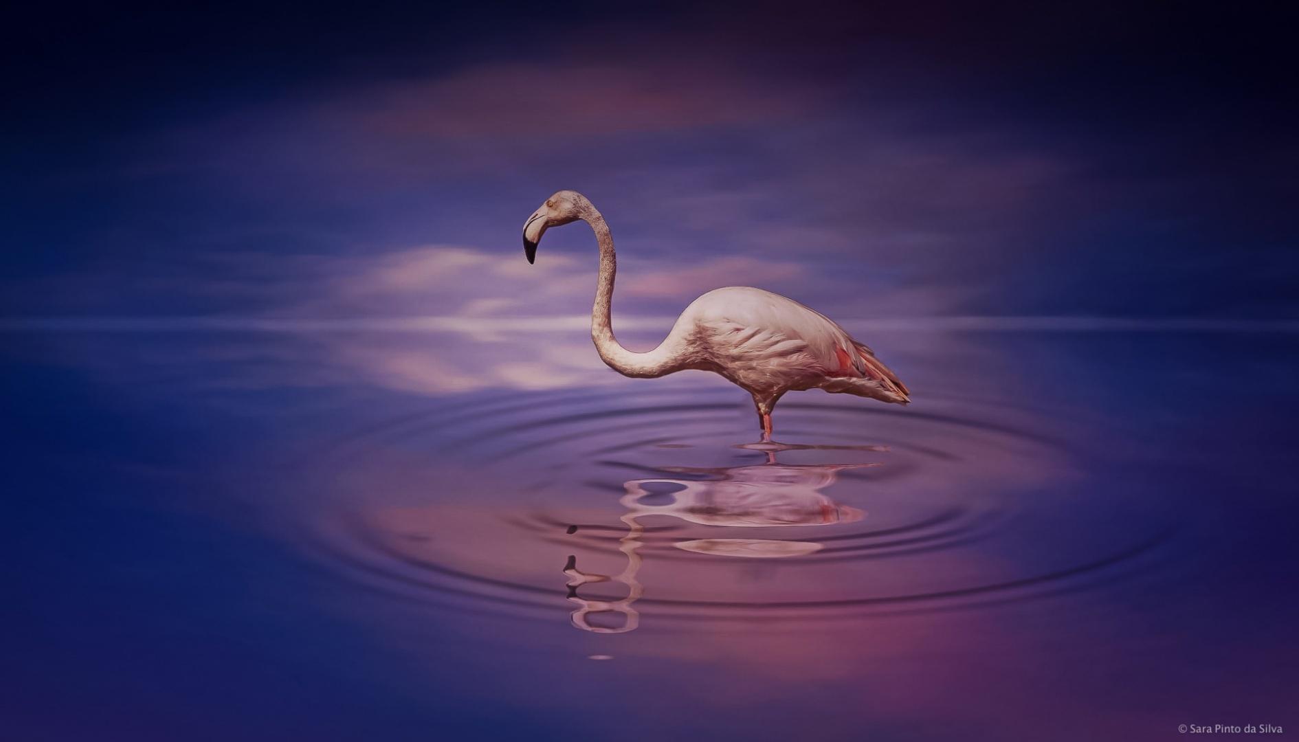 Arte Digital/flamingo