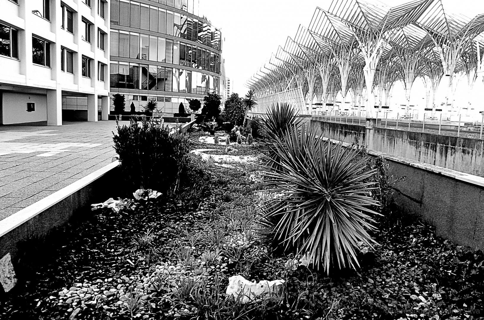 Paisagem Urbana/W/B #12
