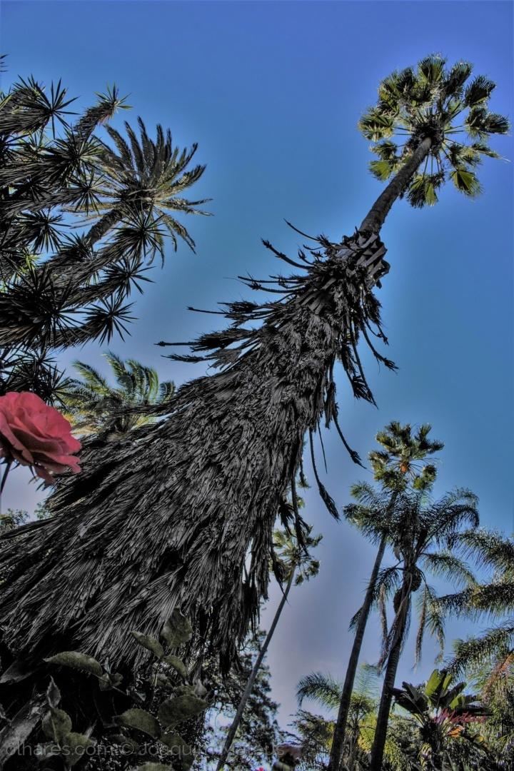 Outros/Árvores...