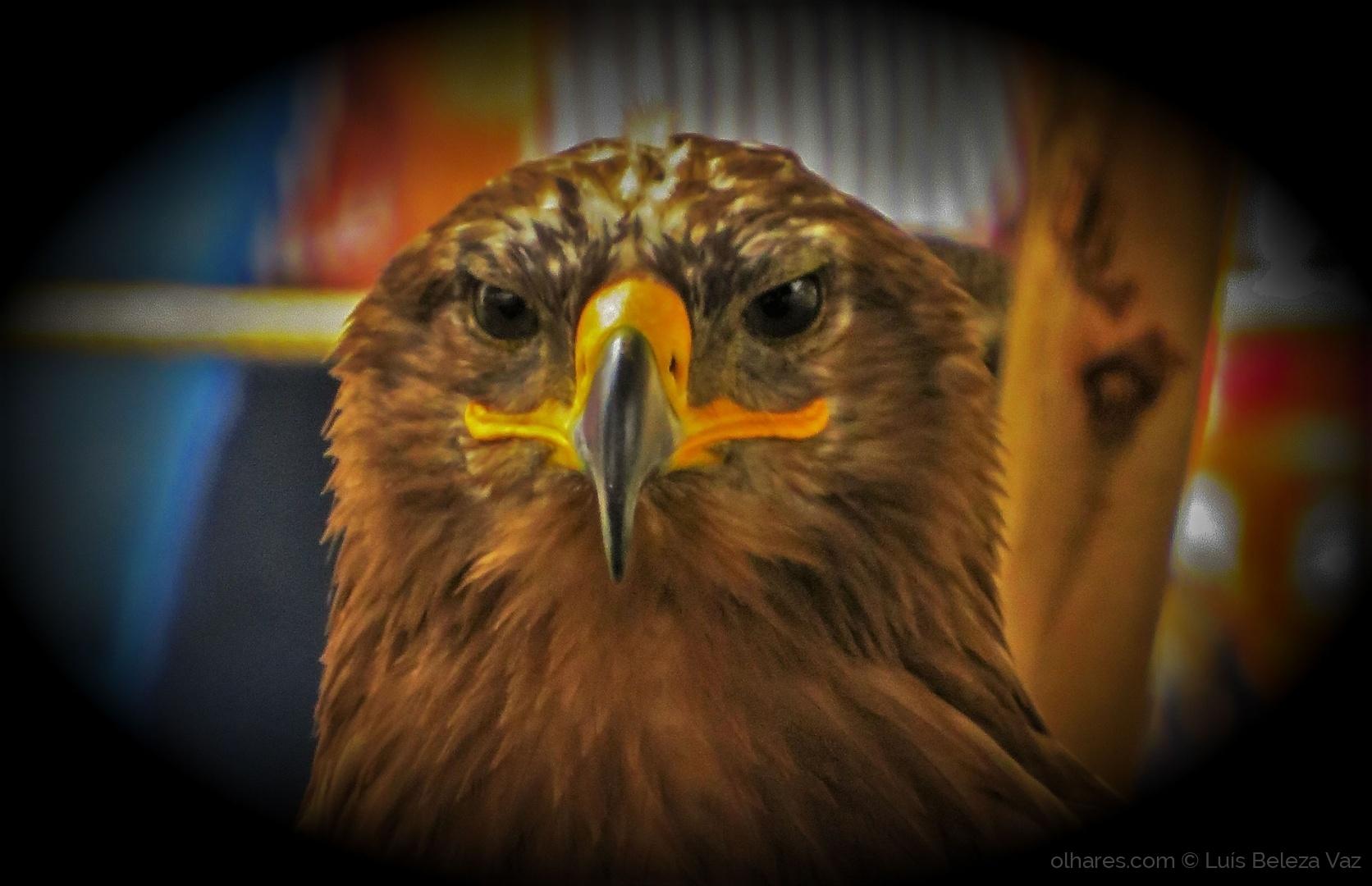 Animais/Olhar de Aquila rapax