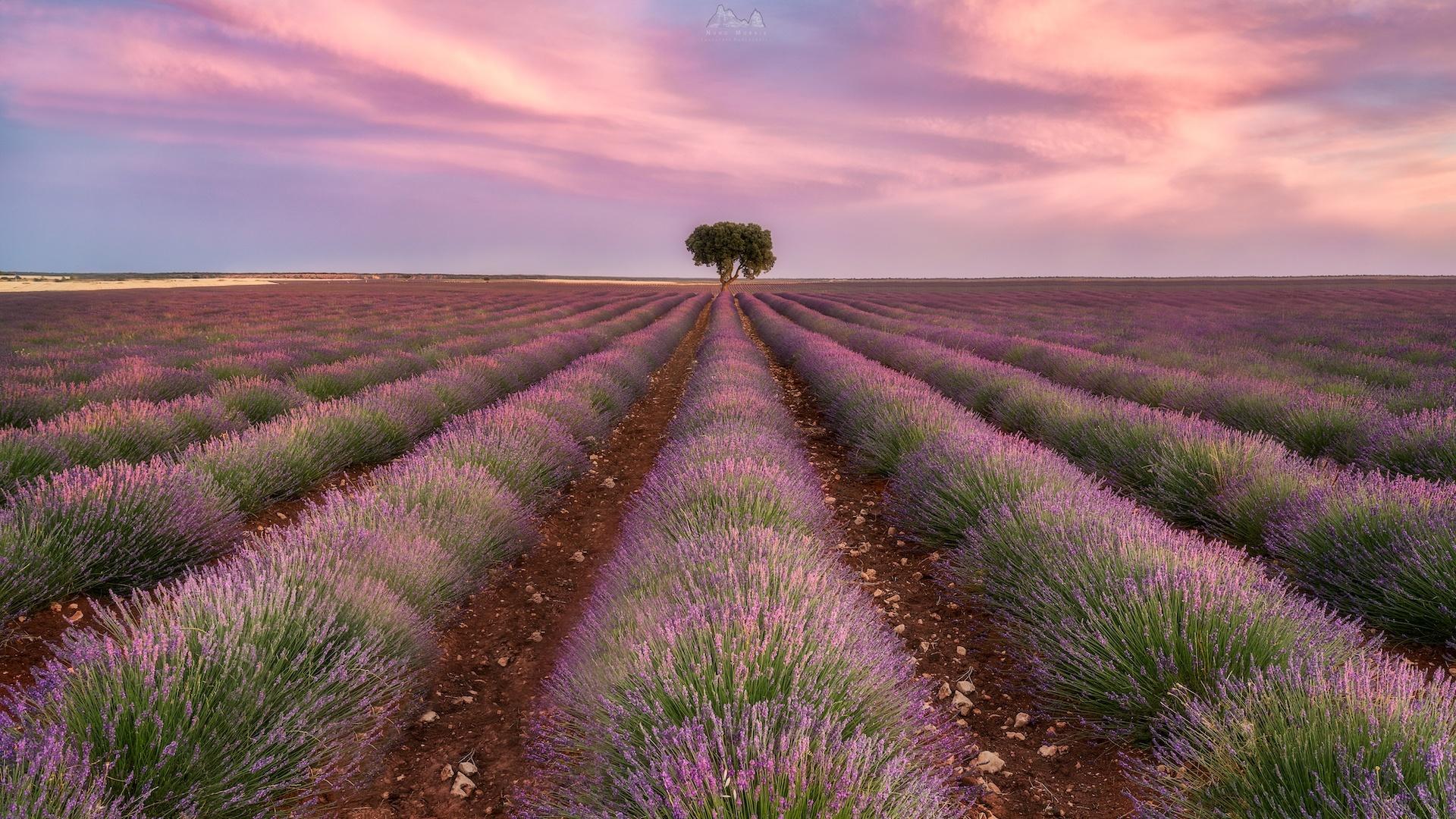 Paisagem Natural/The Lavender Fields