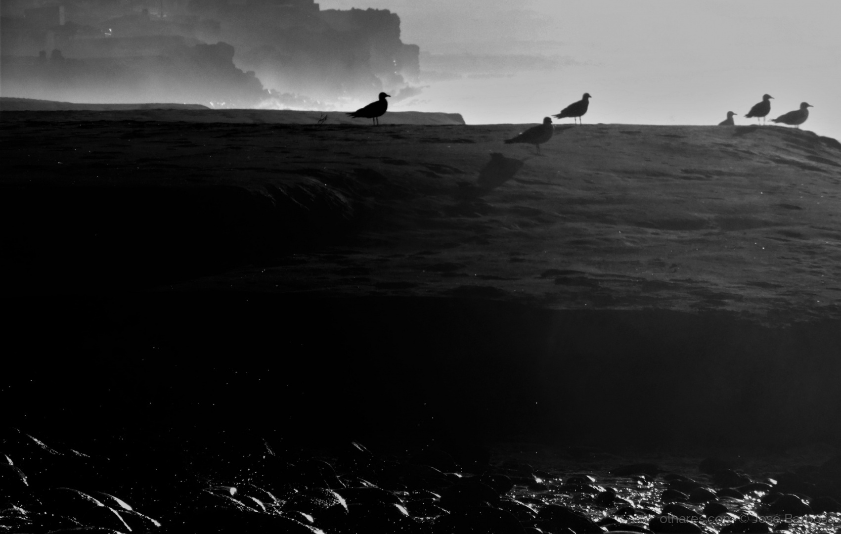 Animais/Feel and listen the sound of the birds and the sea