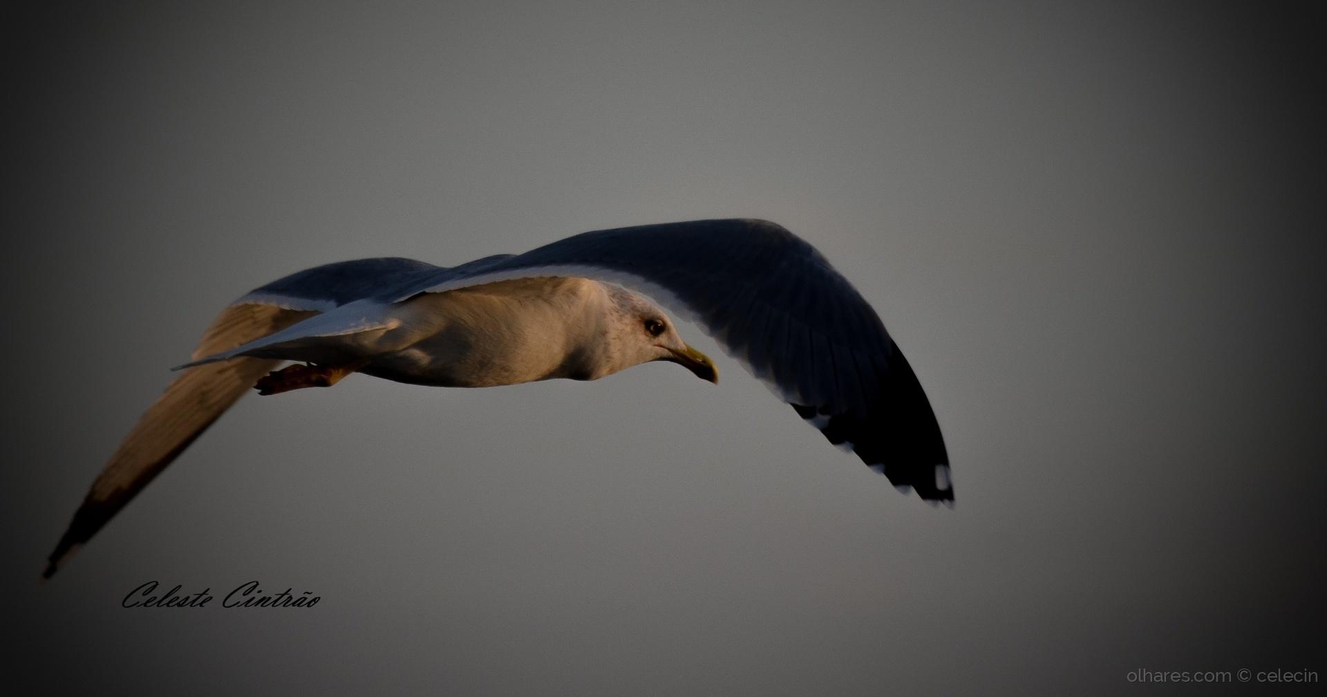 Animais/Se uma gaivota viesse....
