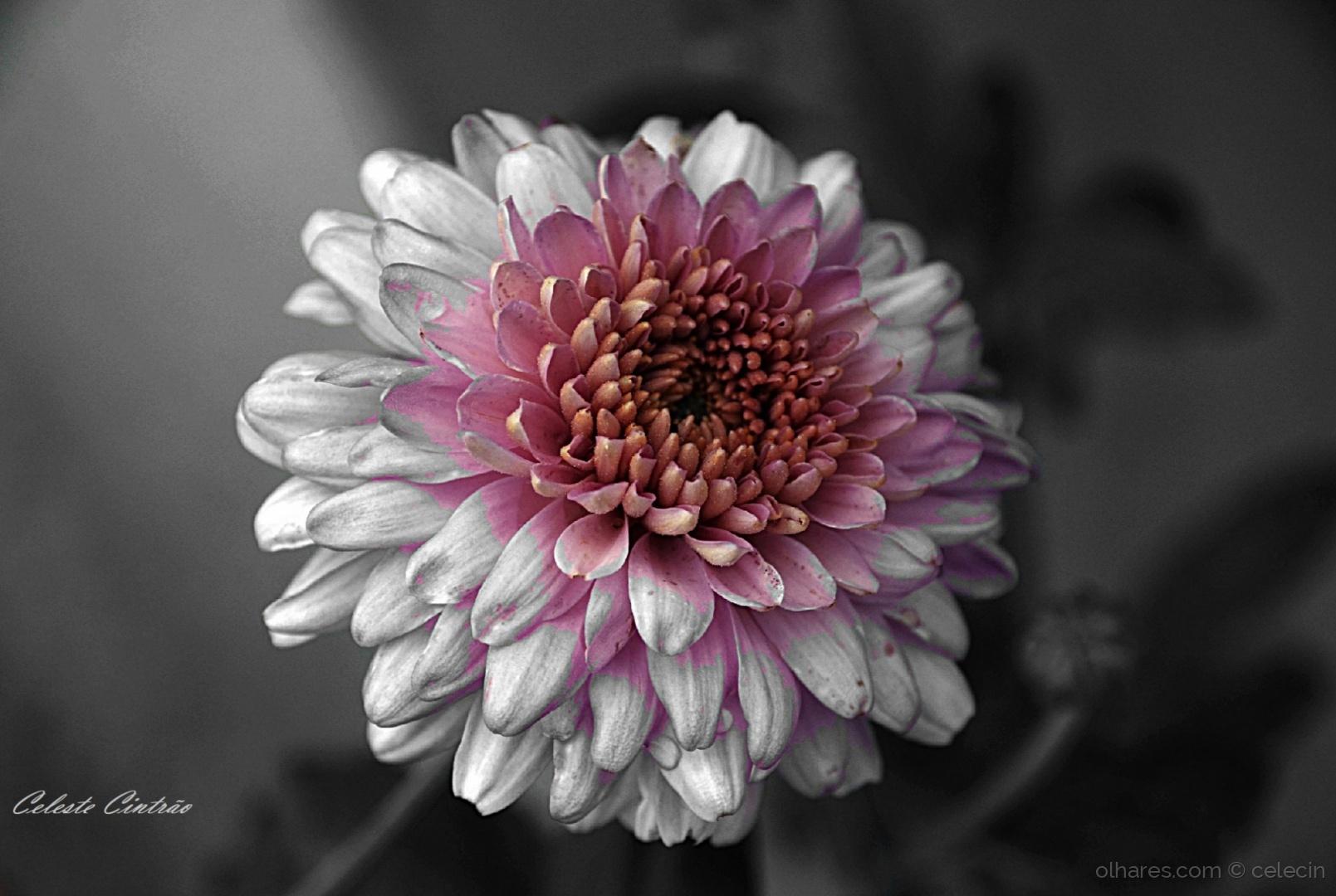 Macro/Uma flor.