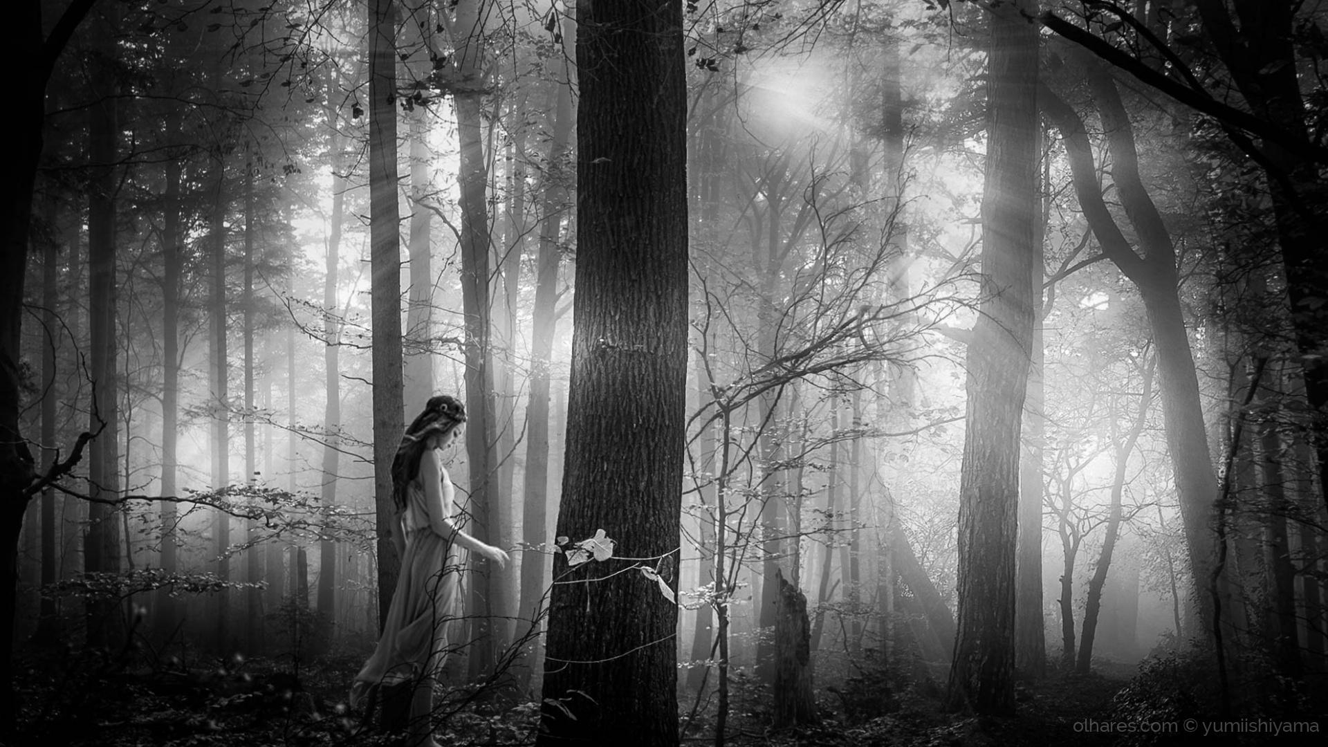 Paisagem Natural/ The Light