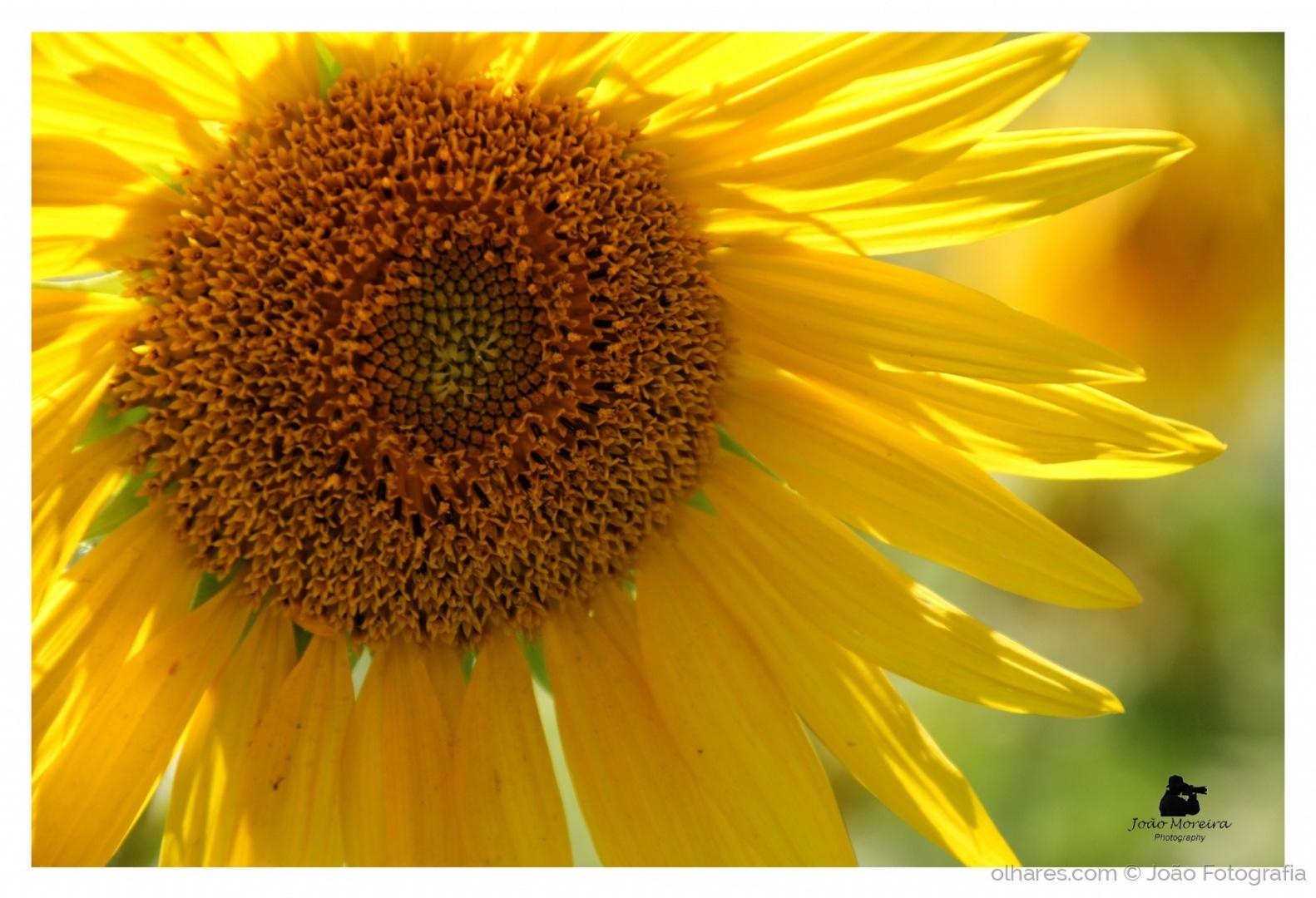 Paisagem Natural/Yellow