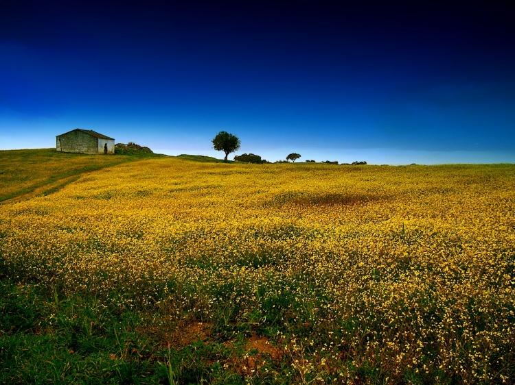 Paisagem Natural/Uma casa no campo