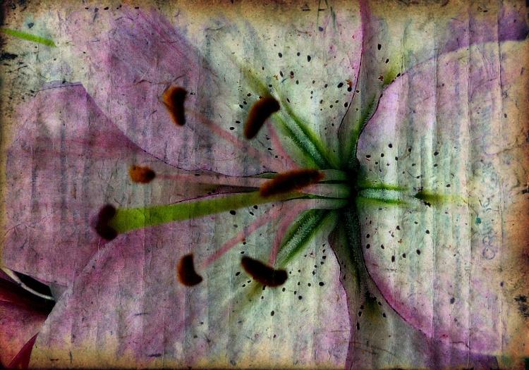 Arte Digital/...não sou flor que se cheire