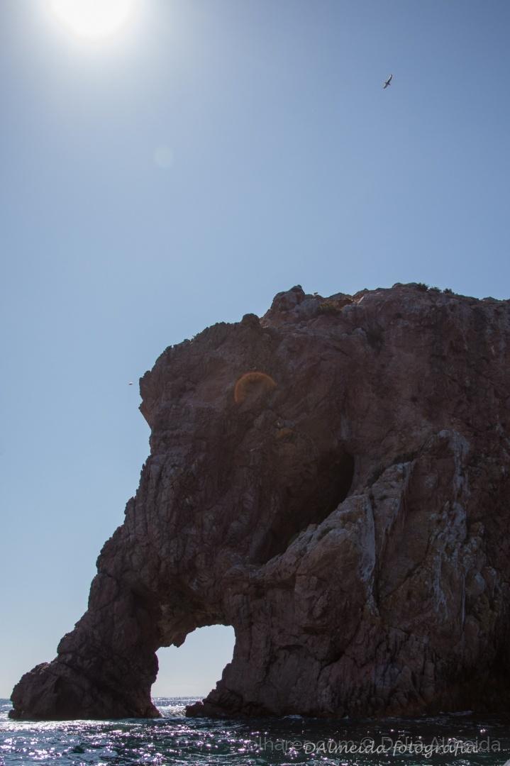 Paisagem Natural/Elefante de pedra