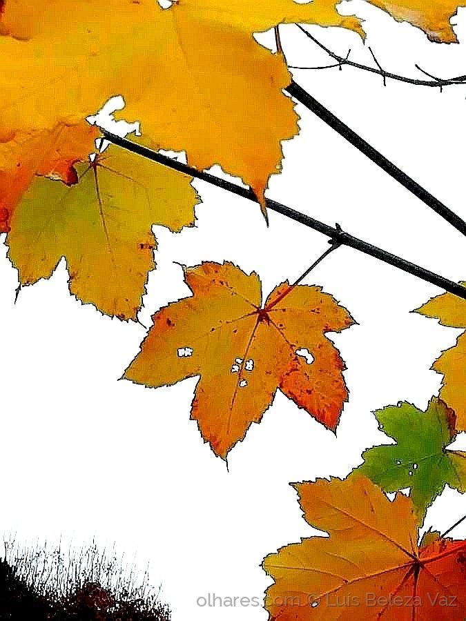 """Paisagem Natural/""""Outono"""""""