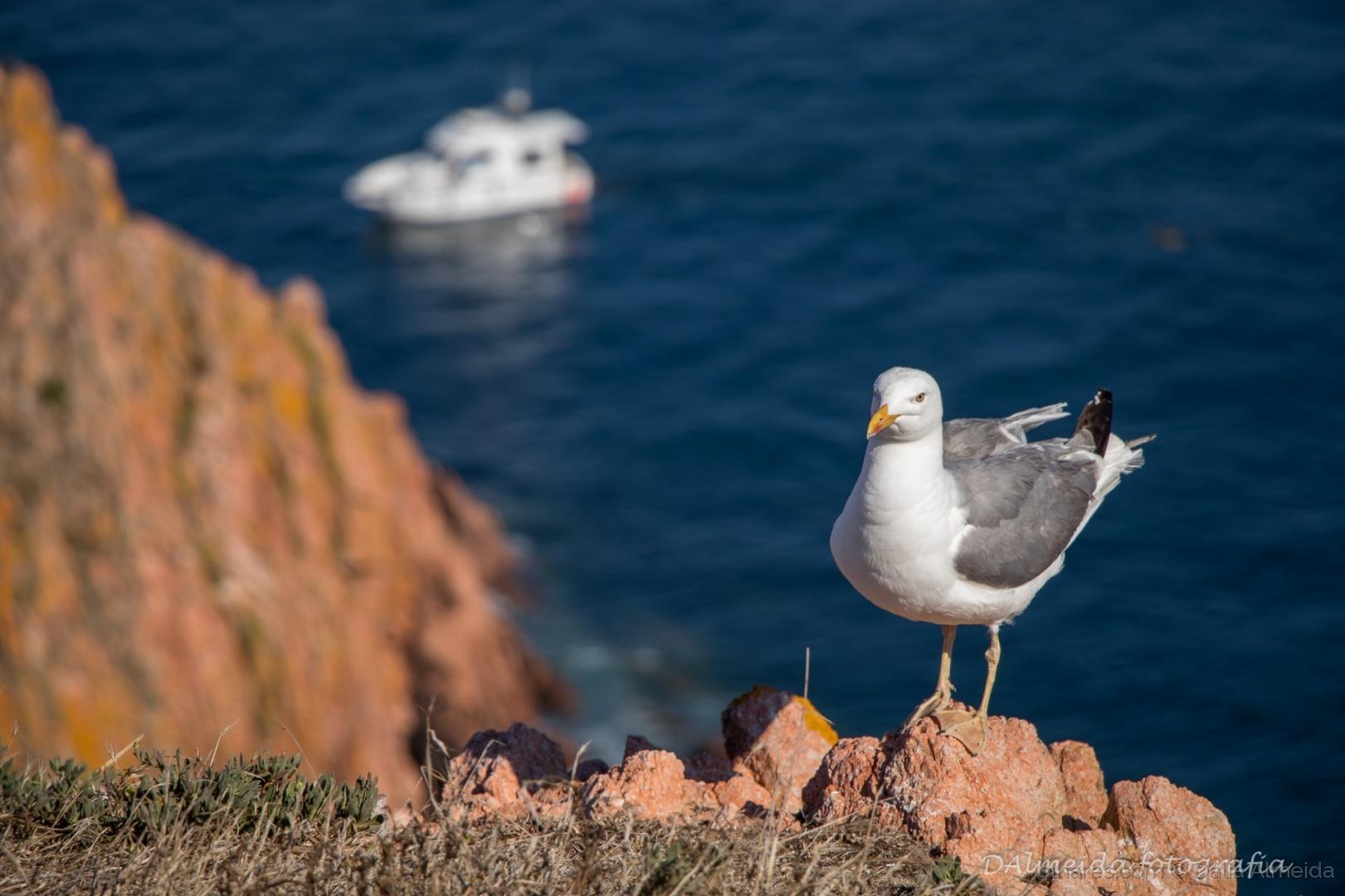 Paisagem Natural/A gaivota e o barco
