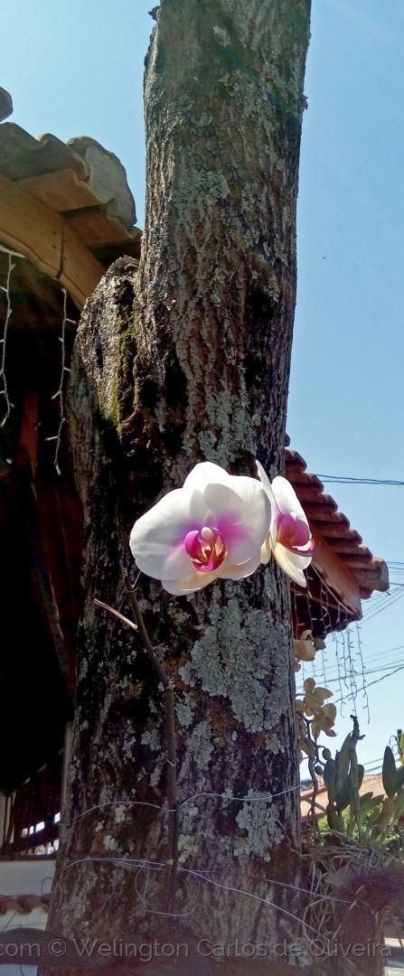 Macro/Orquídea