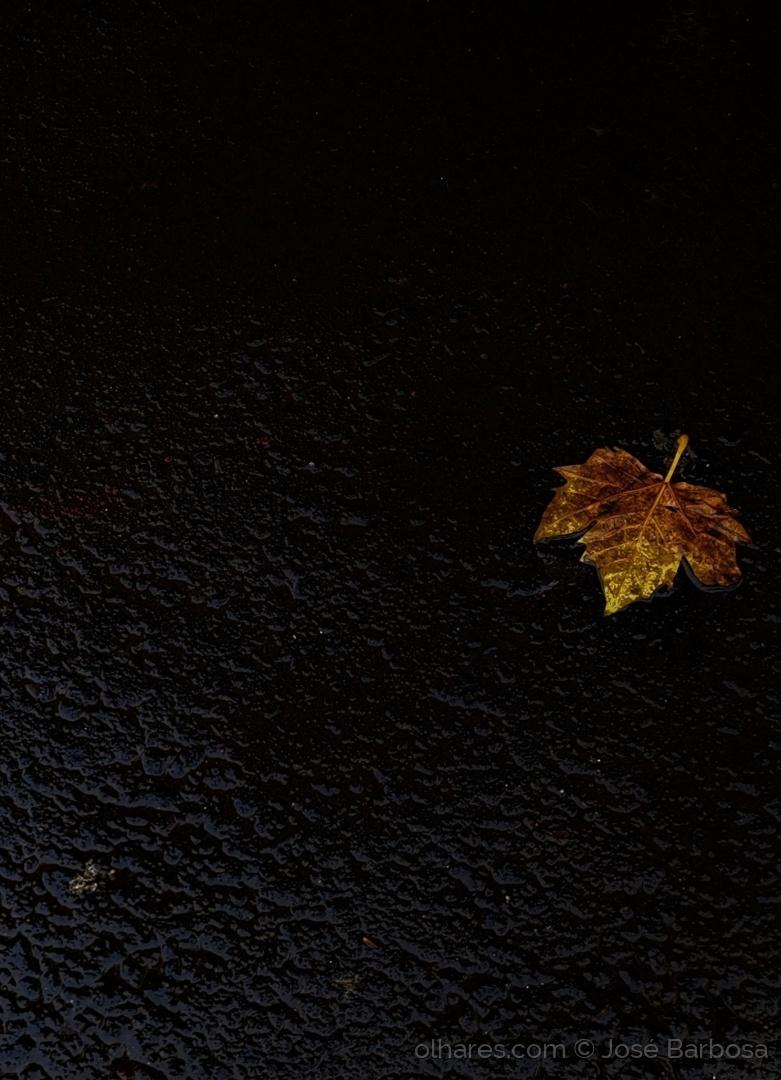 Macro/a pequena folha de Outono que iluminou a escuridão