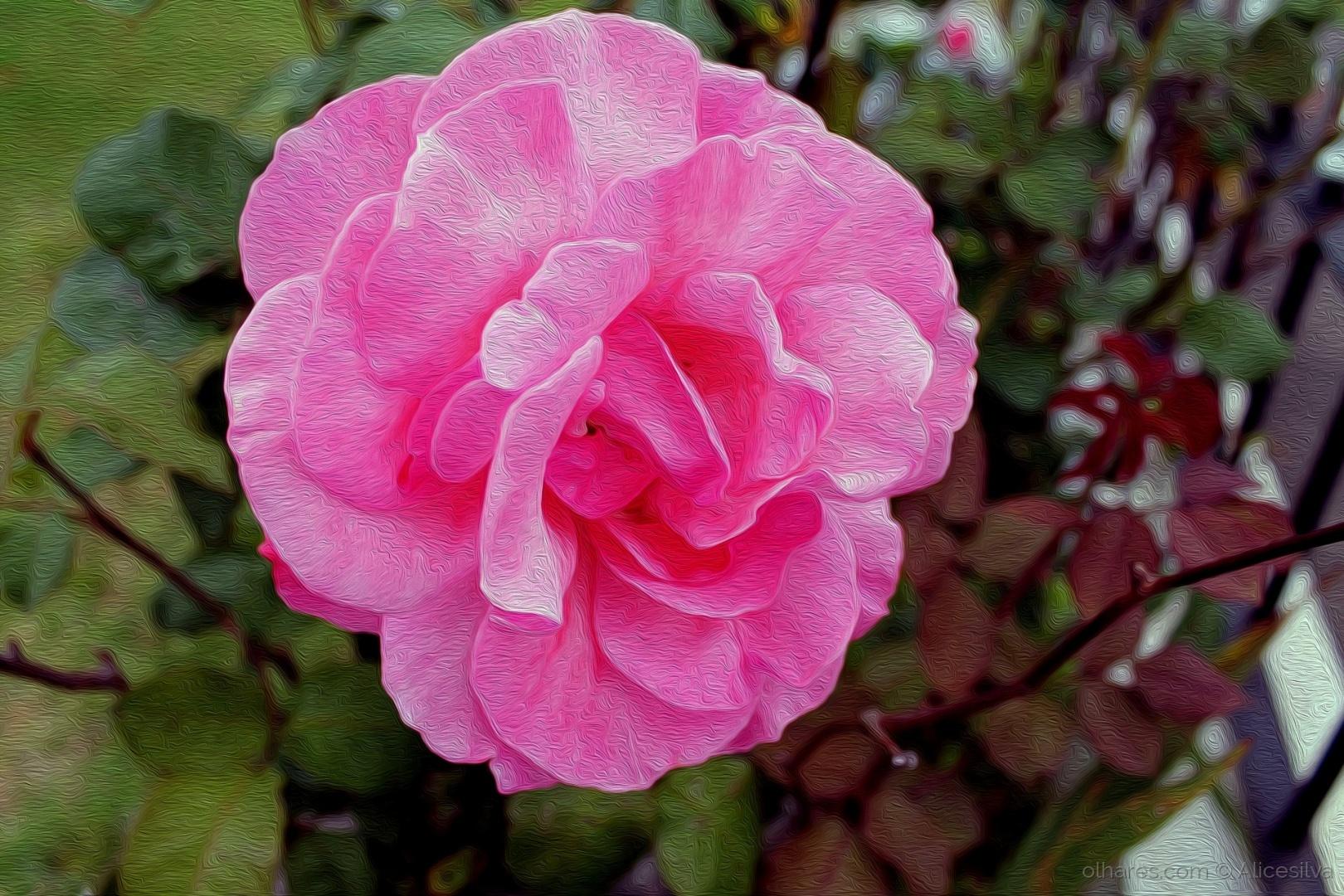 Macro/Os espinhos das rosa podem machucar, mas tudo vale