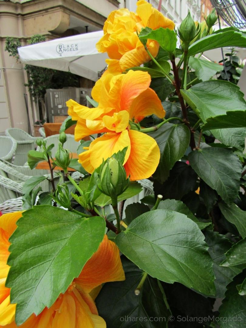 Paisagem Urbana/Flores amarelas