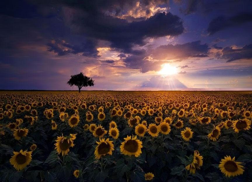 Paisagem Natural/The Way You Shine ...