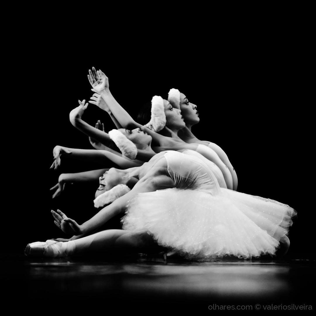 Espetáculos/O Cisne