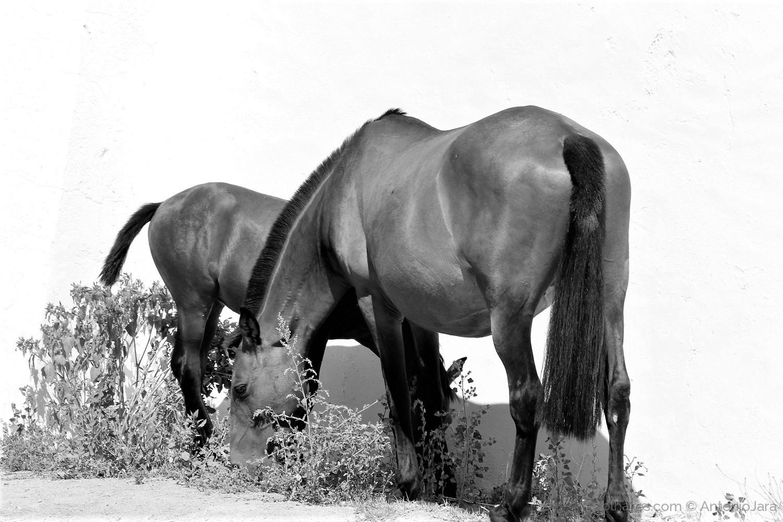 Animais/Égua e Potro em liberdade