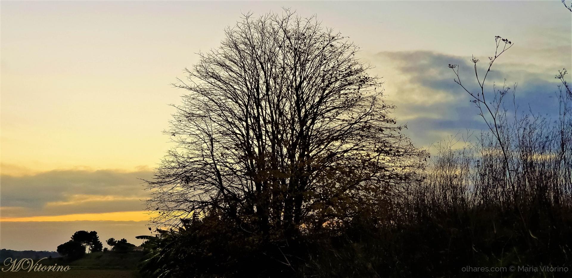 Paisagem Natural/ Autumn of life (ler sff)